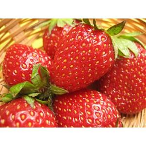 Frutillas IQF 1 Kg